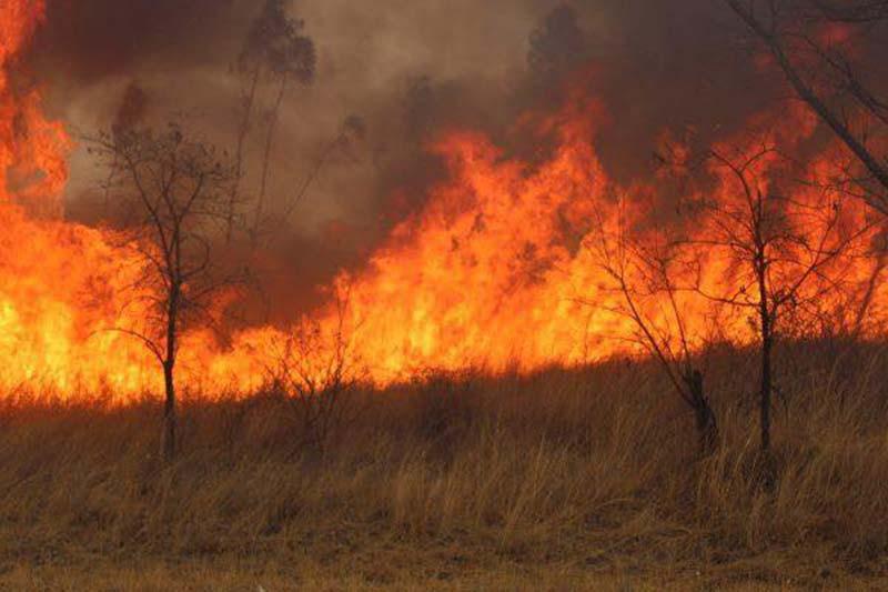 Midlands province at high risk of veld fires